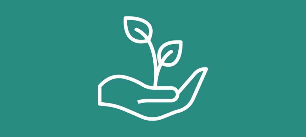 Comment planter, récolter et fabriquer le Maté ?